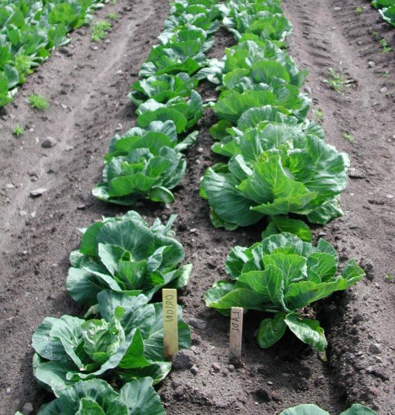 Lær om norske grønnsaker