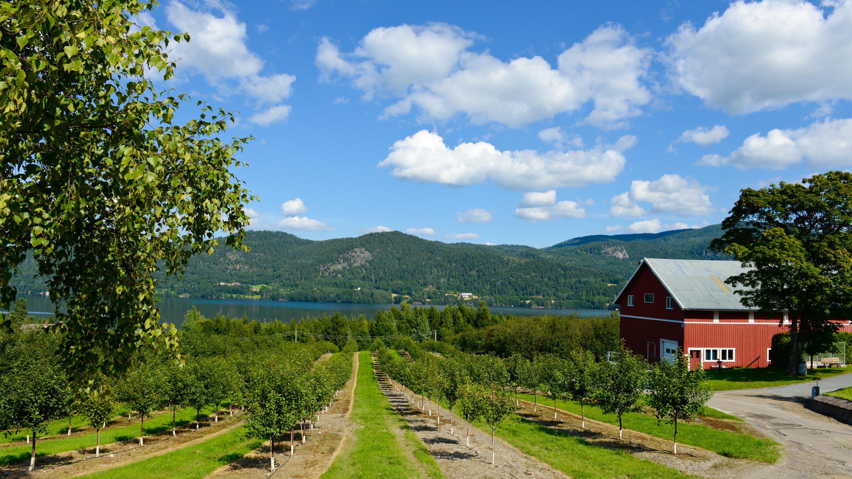 Landbruket i Norge og verden