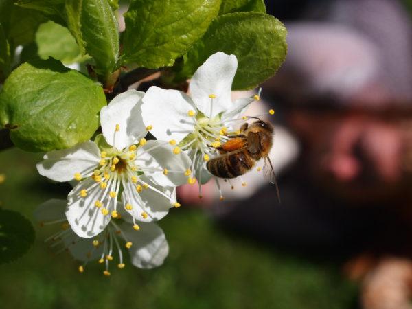 Lær om bier