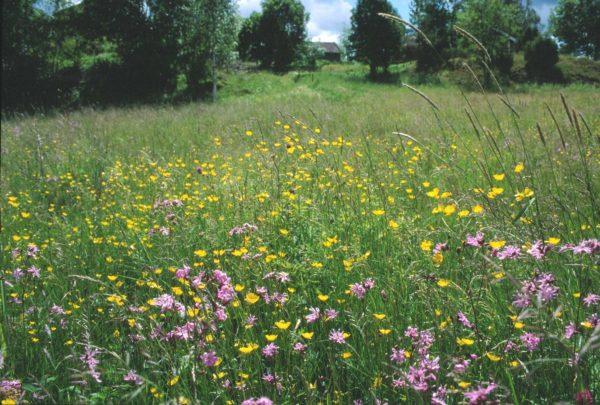 Planter fra nærområdet