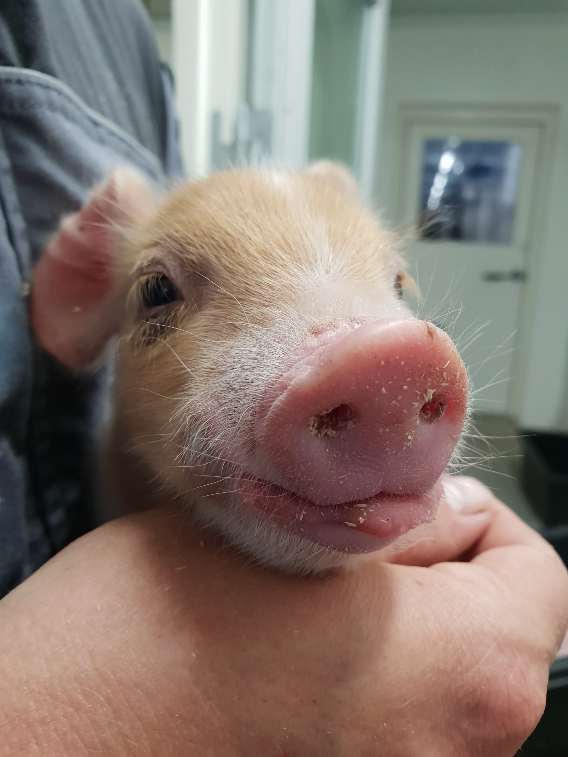 Quiz om grisen